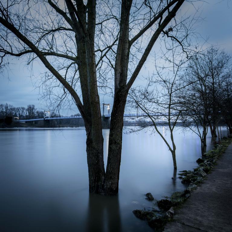 Bords de Loire, arbre et pont de fil - Février 2018