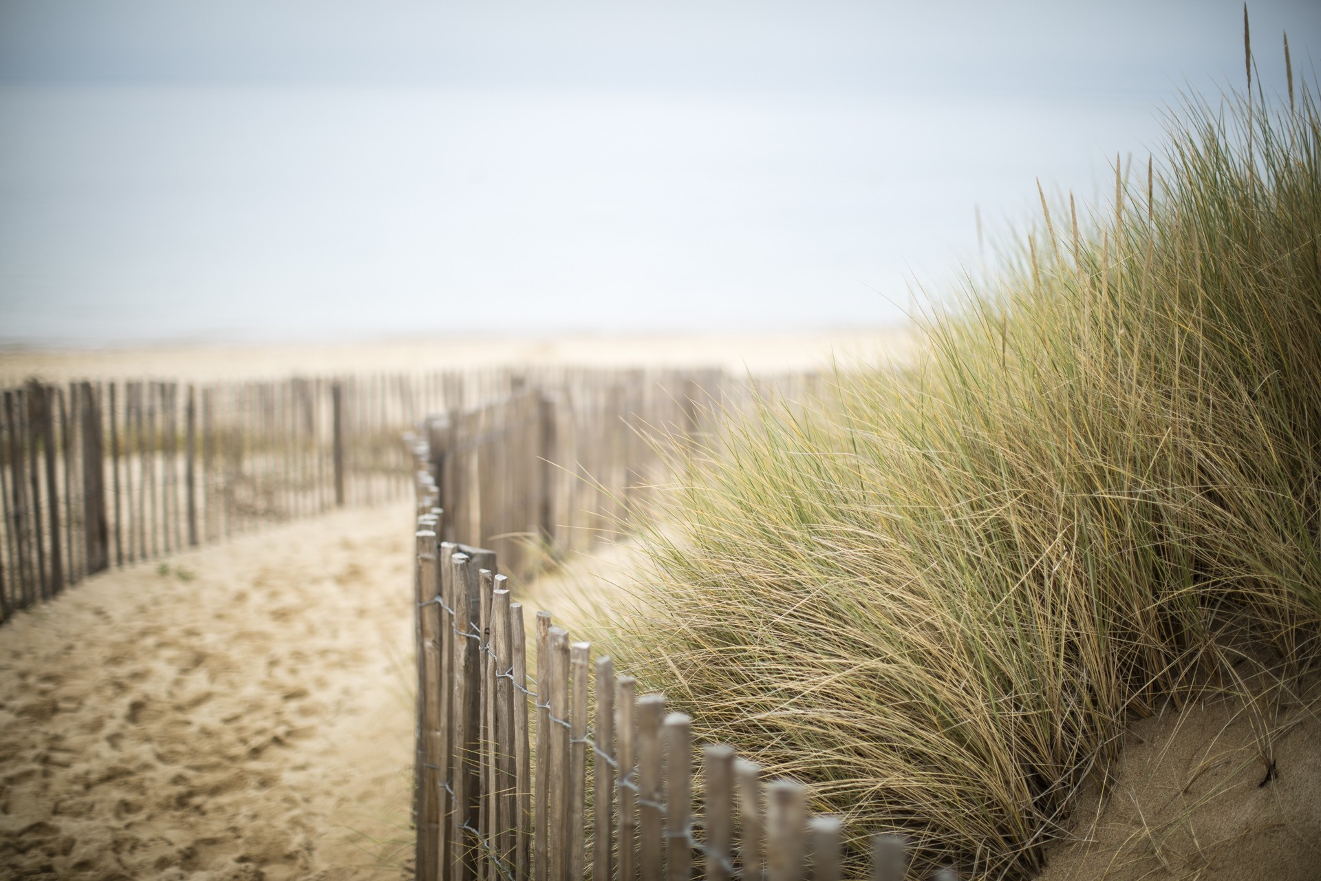 Chemin dans la dune - Morbihan - Août 2020